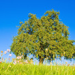Idyllic meadow with tree — Foto de stock #1932972