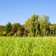 Idyllic meadow with tree — Stock Photo #1934396