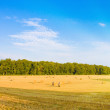 Golden field with sunlight — Stock Photo