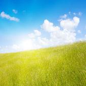Idyllic lawn with sunlight — Stock Photo