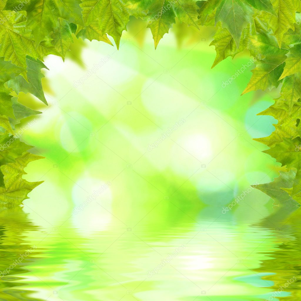 Beautiful green leaves with green background and reflection in spring — Stock Photo #1931052