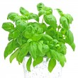 Basil — Stock Photo #1972103
