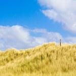 Dunes — Stock Photo #2100398