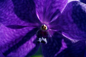 Vibrant purple orchid — Stock Photo