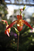 Two red orchids on a stem — Stock Photo