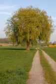 Path with willow — Stock Photo