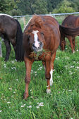 Eating horse — Stock Photo