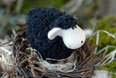 Black sheep — Foto de Stock