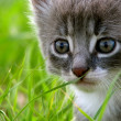 Kitty sitting on the grass in the garden — Stock Photo