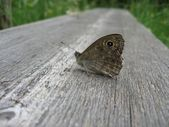 Butterfly on the wood texture — Stock Photo