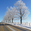Hoar frost covered trees and rural road - Stock Photo