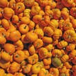 Many mini pumpkins background — Stock Photo #2077399