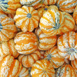 Carnival squash background — Stock Photo
