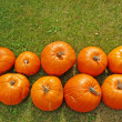 Pumpkin rows on grass background — Stock Photo