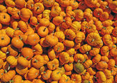 Many mini pumpkins background — Stock Photo