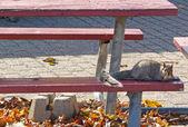 Siesta squirrel — Stock Photo