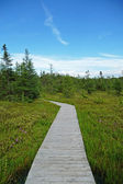 Wooden boardwalk through a bog — Stock Photo