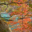Autumn trees in the Niagara gorge — Stock Photo