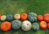 Various pumpkin varieties on grass — Stock Photo