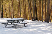 Winter picnic table with sunlit cedars — Stok fotoğraf