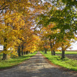 Autumn rural driveway — Stock Photo