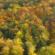 Autumn Foliage — Stock Photo #1969725