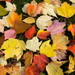 October Leaves — Stock Photo #1988683