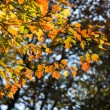 October Leaves — Stock Photo