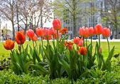 Spring ina Big City — Stock Photo