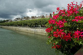 Red flowers on bridge with houses front — Stock Photo