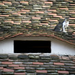 Domestic cat resting on a roof — Stock Photo