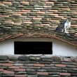 Domestic cat resting on a roof — Stock Photo #2030962