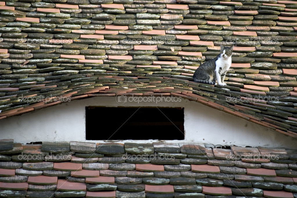Domestic cat resting on a roof with tiles and traditional attic window from sibiu — Stock Photo #2030962
