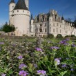 Stock Photo: Chenonceau castle in France Loire Valley