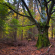 Foto Stock: Tree in autumn forest