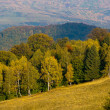 Autumn forest golden green hill - Stockfoto
