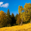 Stock Photo: Tree in golden light in autumn