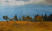 árboles en otoño en la montaña — Foto de Stock