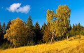 Tree in golden light in autumn — Stock Photo