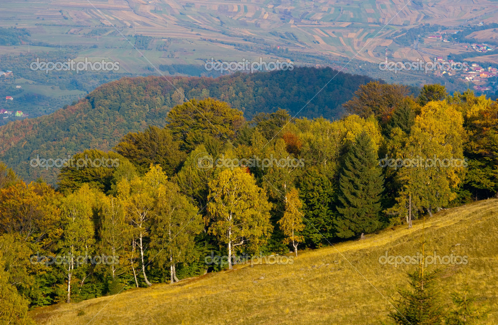 Autumn forest golden green hill with fileld in background  Stock Photo #2244814