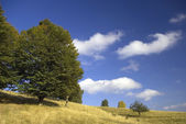 Mountain meadow autumn blue sky — Stock Photo