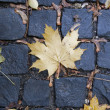 Mapple leaf on cobblestone in fall — Stock Photo