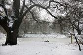 Oak tree in winter — Stock Photo