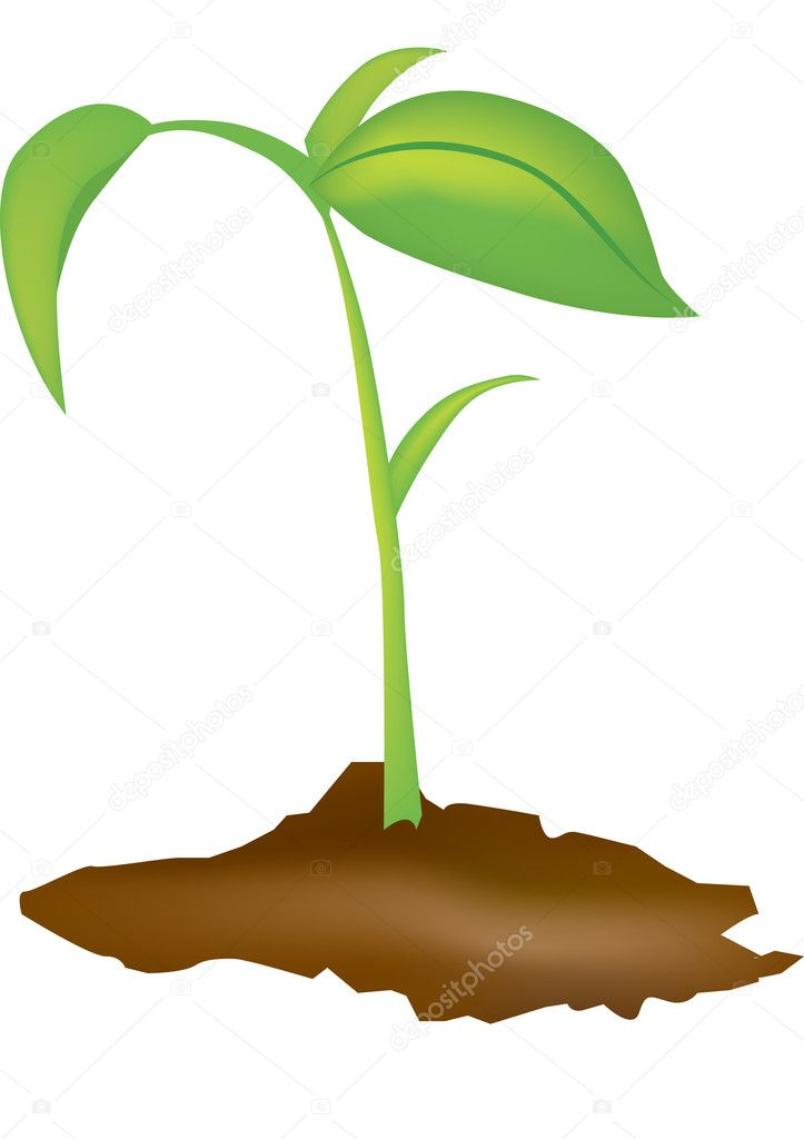 Vector illustration of a young green seedling  Stock Photo #2118639
