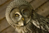 SWRL A Semantic Web Rule Language Combining OWL and RuleML
