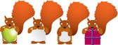 Red squirrel set — Stock Photo