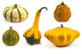 Autumn gourds and pumpkins — Stock Photo