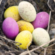Easter eggs in nest — Stock Photo #2488618