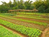 Green garden — Stock Photo