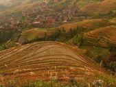Rice terraces — Stock Photo